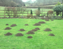 The Mole Man | Controlling Moles in the Garden and Lawn