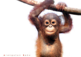 PALM OIL IS KILLING THE PLANET